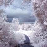 Iarna 15