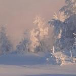 Iarna 11