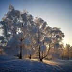 Iarna 29