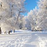 Iarna 33