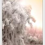 Iarna 35