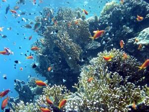 corail-poissons